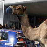 Liqui Moly Team Engslter Ganó En Dubai En La Serie 24H TCE